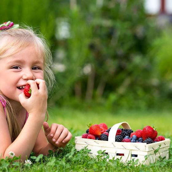 Erdbeerpflanze Candiss(S), getopft