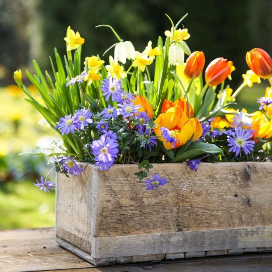 Blumenzwiebel-Sortiment Gärtner Pötschkes Naturfreude