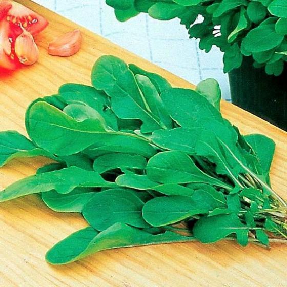 Salat-Rucolasamen Salat-Rauke