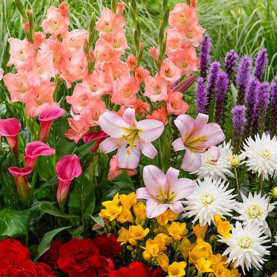Blumenzwiebel-Set Bunter Sommer