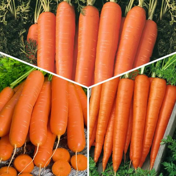 Gemüsesamen-Sortiment Gartenmöhren