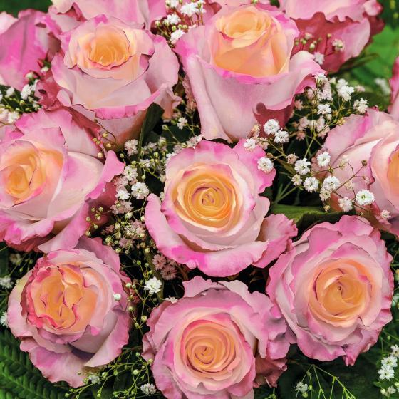 Edelrose Laetitia Casta®, im ca. 17 cm-Einpflanztopf