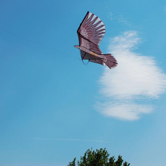 Tiervertreiber Adler