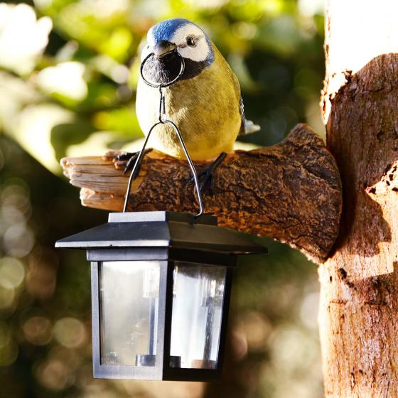 Solarlampe neugieriger Vogel, 16x11,5x17 cm, Polyresin