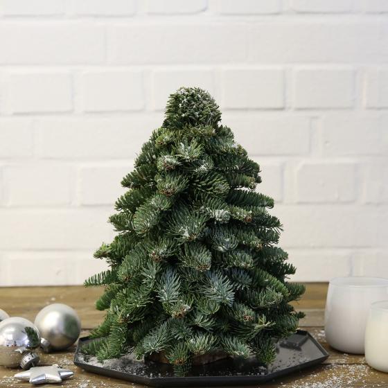Nobilis-Weihnachtsbäumchen, klein