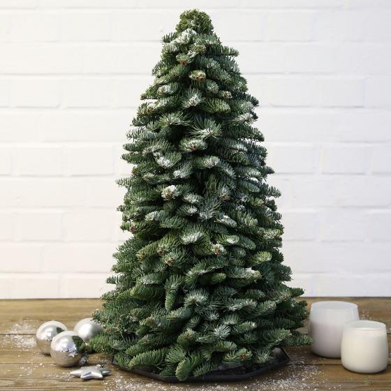 Nobilis-Weihnachtsbäumchen, groß