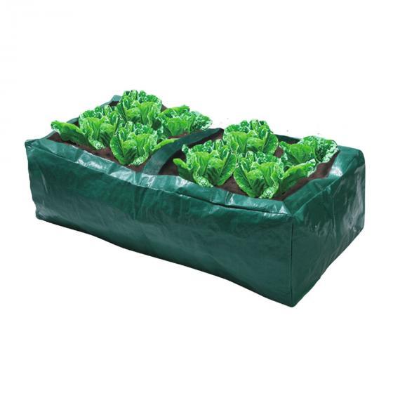 Salat-Anzuchtbox