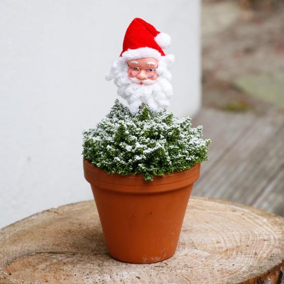 Glitzer Veronika mit Weihnachtsmann