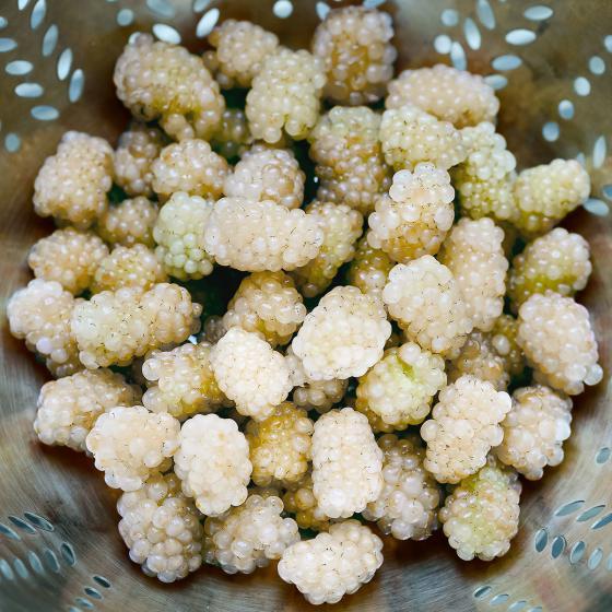 Weiße Brombeere Polar Berry