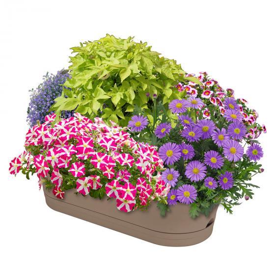 Sommerblumen-Sortiment Kunterbunter Kasten