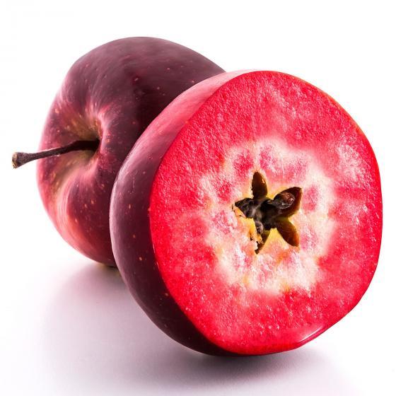 Rotfleischiger Apfel Vampira, im ca. 26 cm-Topf