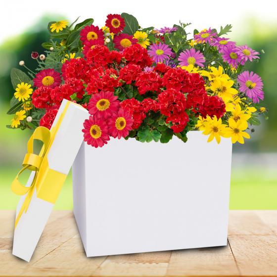 Großes Sommerblumen-Überraschungspaket