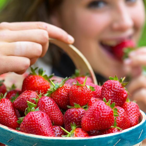 Erdbeere Süsse Brumme, im ca. 9 cm Topf