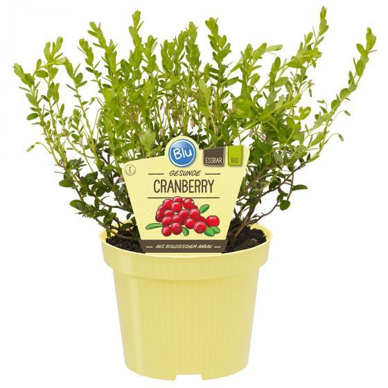 Blu Bio Cranberry