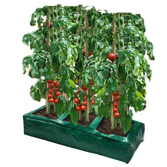 Tomaten-Anzucht-Box, 84 x 33 x 15 cm, PE, grün