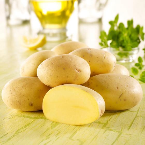 BIO Kartoffel Belana, 10 Stück