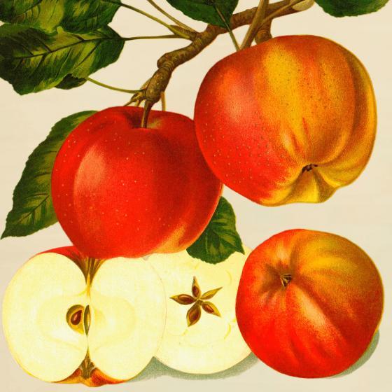 Apfel Altländer Pfannkuchen