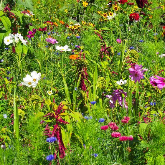 Blumen-Mini-Saatteppich 38 x 17 cm Blumen für Vögel