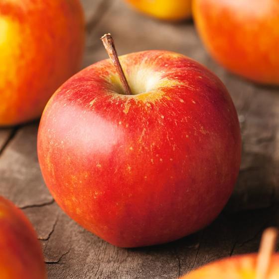 Säulen-Apfel Rondo®, im ca. 23 cm-Topf