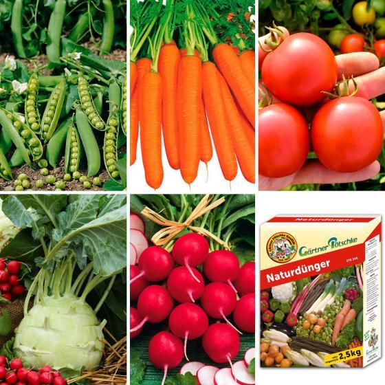 Saatugut-Sortiment Gesunder Gemüse Garten