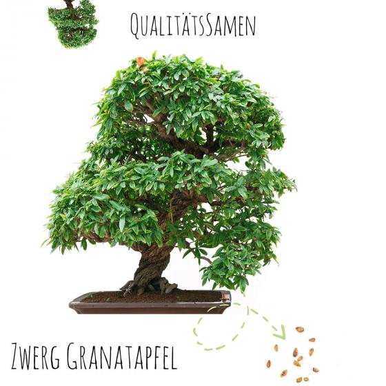 Bonsai Samen Zwerg Granatapfel