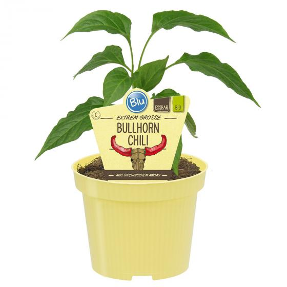 Blu Bio Bullhorn-Chili