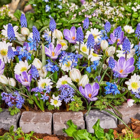 Blumenzwiebel-Mischung Sweet Little Birds