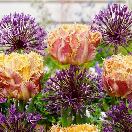 Blumenzwiebel-Mischung Respectable Beauties