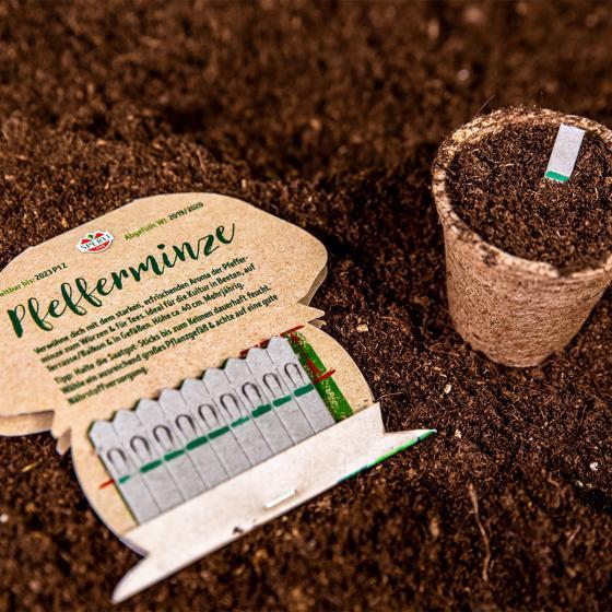10 Saatgut-Sticks zur einfachen Anzucht, Pfefferminz