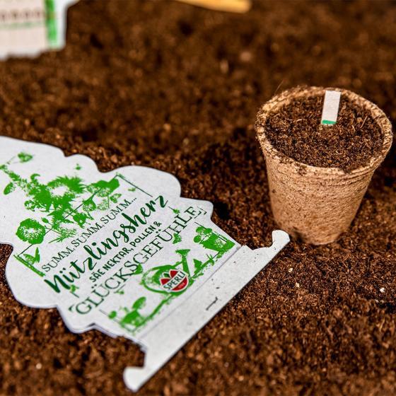 10 Saatgut-Sticks zur einfachen Anzucht, Wildblumenmischung
