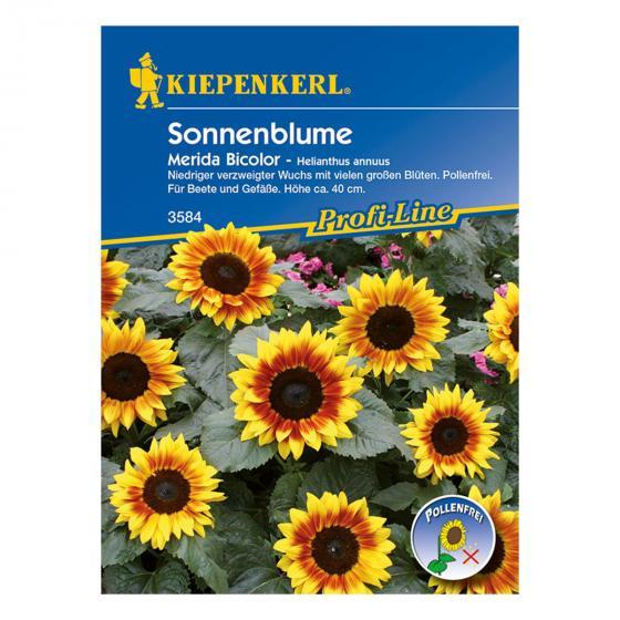 Sonnenblumensamen Merida Bicolor