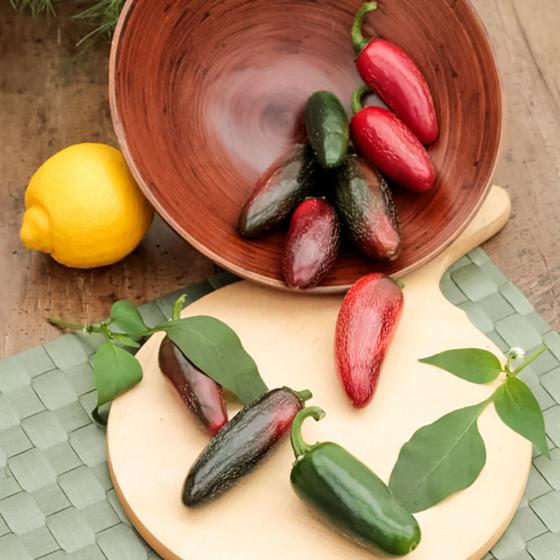 Chilipflanze Jalapeno Samira® Shiny, im ca. 11 cm-Topf