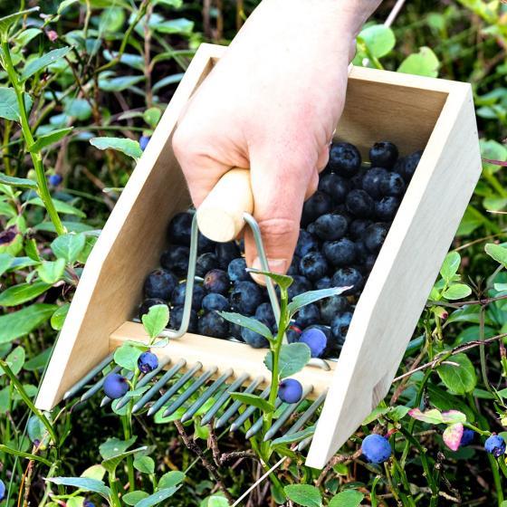 Beerenpflücker Ernteglück, Buchenholz