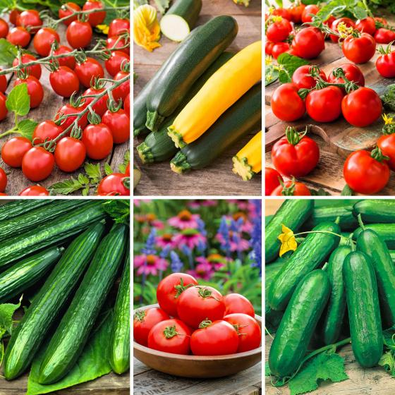Gemüsepflanzen-Set Gemüsevielfalt