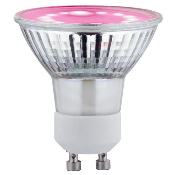 LED Plant GU10 3,5W 230V