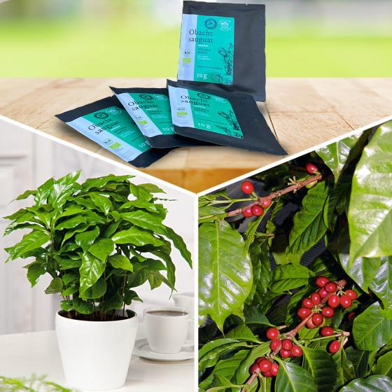 Genießer-Set Allgäuer Bergkaffee mit 4 Portionen Kaffee