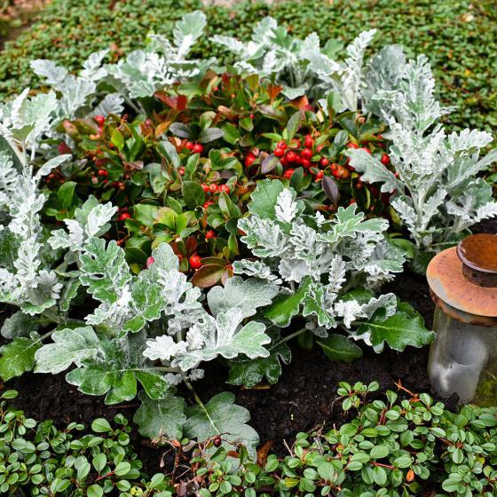 Set Grabbepflanzung Herbstschmuck, Urne