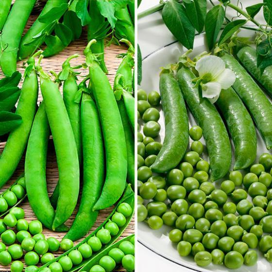Gemüsesamen-Set Markerbsen Aloha und Flavora