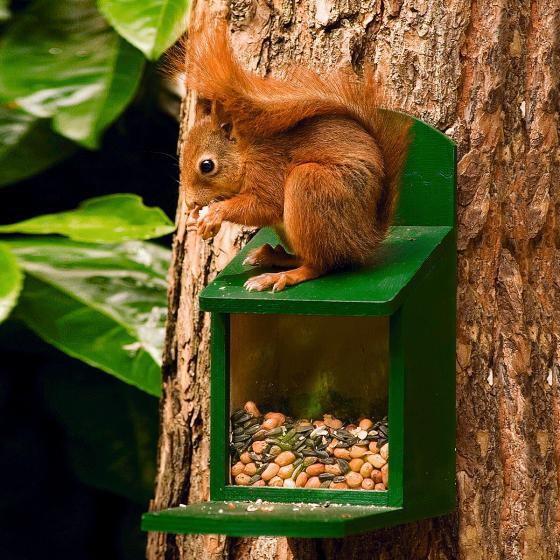 Eichhörnchen Futterautomat