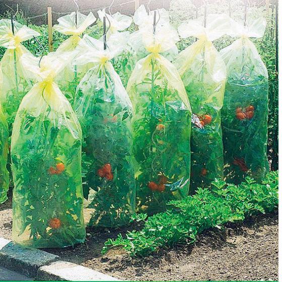 Tomatenreifehauben, 10 x 0,65 m-Schlauch