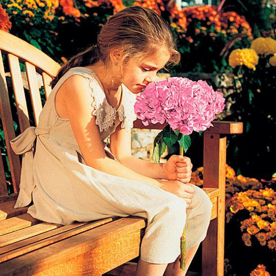 Hortensie Endless Summer® The Original, rosa, XL-Qualität