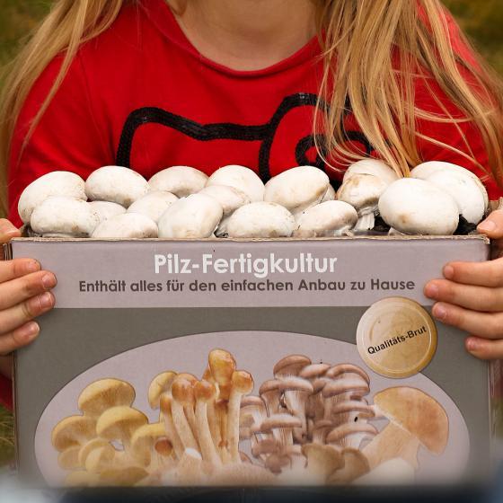 Pilzkultur-Set Weißer Champignon