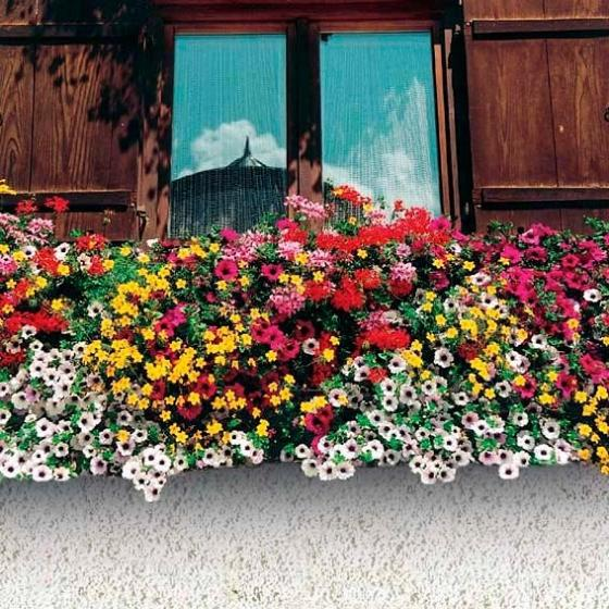 Sommerblumen-Sortiment Bunter Kasten