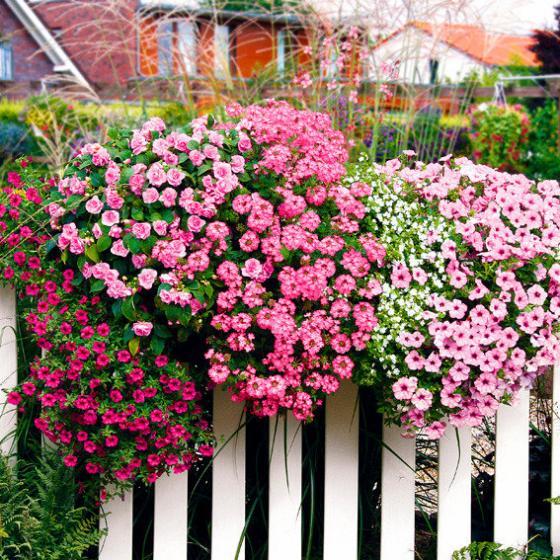 Sommerblumen-Sortiment Pink Paradise