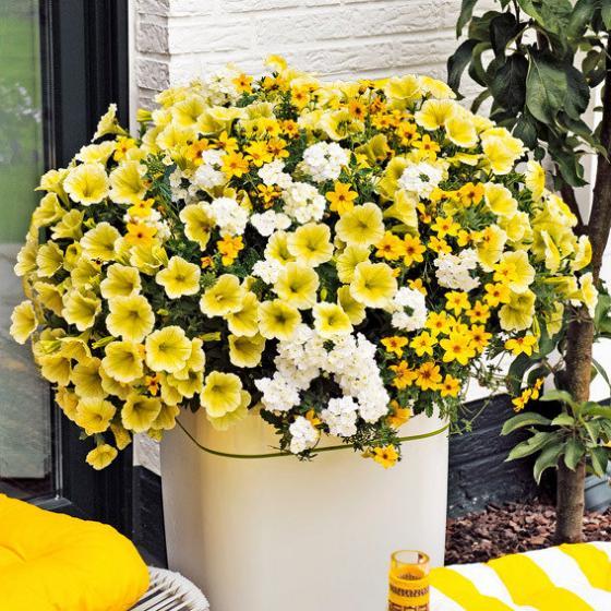 Trio-Fix Confetti Garden Sunshine