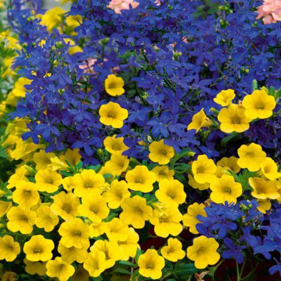 Sommerblumen-Sortiment Schwedischer Sommer