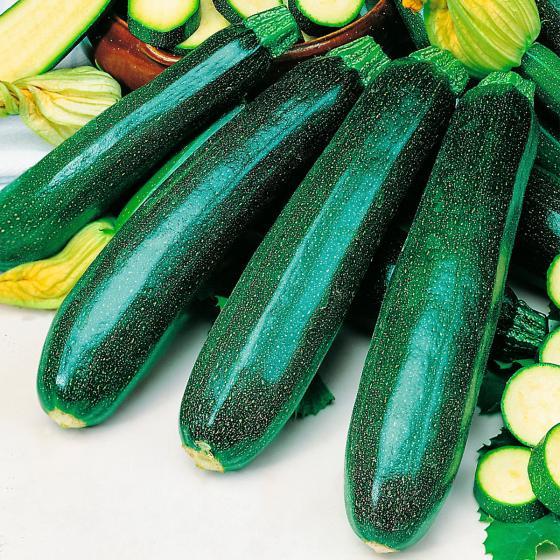 Gemüse-Pflanze Zucchini Malika F1