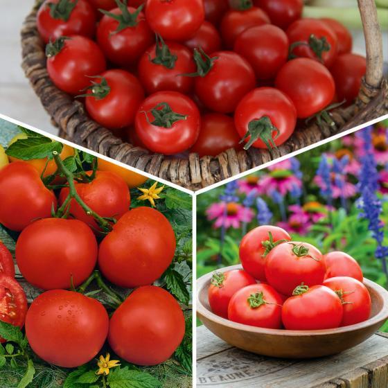 Gemüsepflanzen-Sortiment Garten-Tomaten, im ca. 10,5 cm-Topf