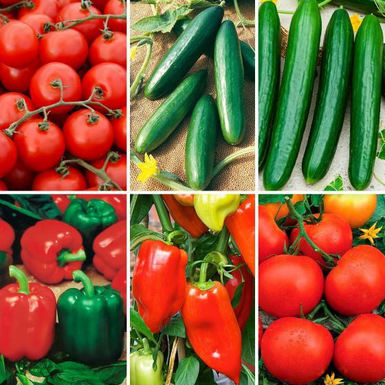 Überraschungs-Paket veredelte Gemüse-Pflanzen