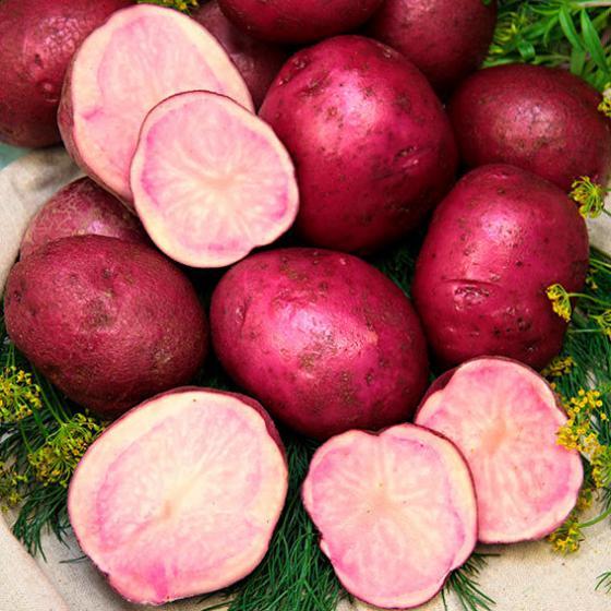 Kartoffel Königspurpur, 1 kg